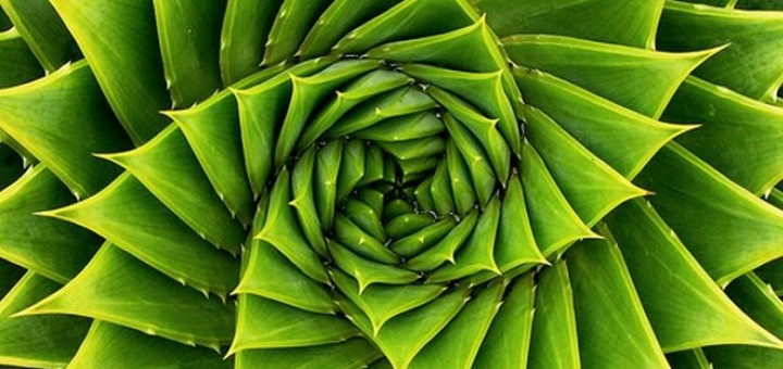 The Natural Spiral